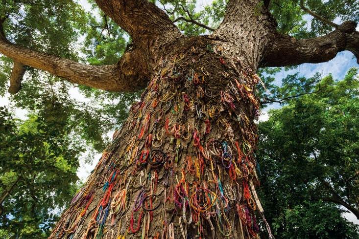 &#8\2\20;Chankiri tree&#8\2\2\1; (The Killing Tree), in Choeung Ek Killing Fields, Phnom Penh, Cambodia.