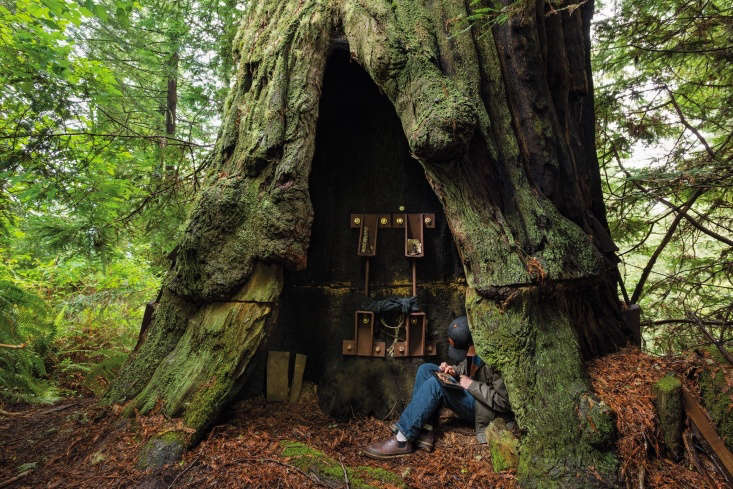 In the Redwood Forest in Stafford, CA, Luna is a 0-foot coastal redwood that has been living in Humboldt County for more than loading=