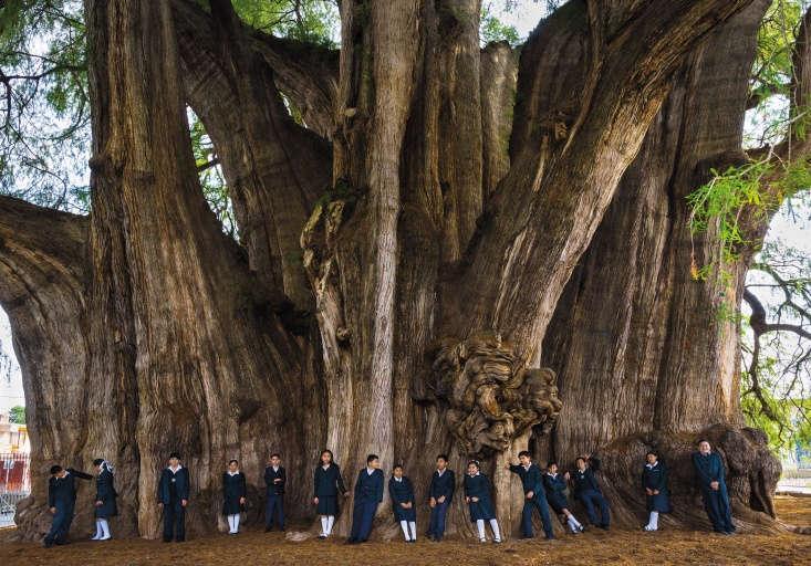 Sixth grade school children from the Colegio Motolinia de Antequera, on a class field trip, gather for a class portrait under the Motezuma Cypress Tree, &#8