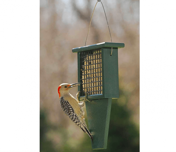 A Tail Prop Suet Feeder specially designed for the comfort of woodpeckers comes with a lifetime guarantee on workmanship; it is $.99 from The Bird Watcher&#8