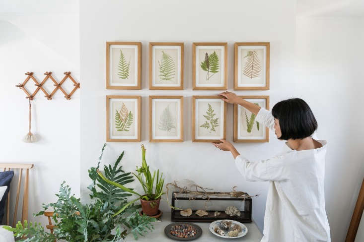 The power of symmetry: fern leaves in simple wooden frames impose order on a botanical composition that includes houseplants, dried leaves, and shells.