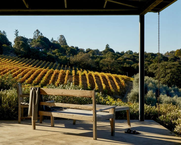 Grape vines and olive trees, both suited to warm, drier climates, are grown at Baker Lane Vineyards in Sonoma. Photograph by Daniel Dent for Gardenista, fromThe Winemaker&#8\2\17;s Life: A Garden Idyll in Northern California.