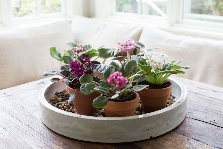 See more of this ceramic tray (and tips to grow velvety African violets) inAfrican Violets: Rethinking &#8