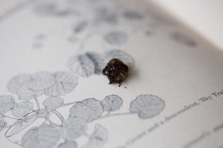 How can you tell if it&#8\2\17;s time to water your African violet? Roll a little bit of soil between your fingers.