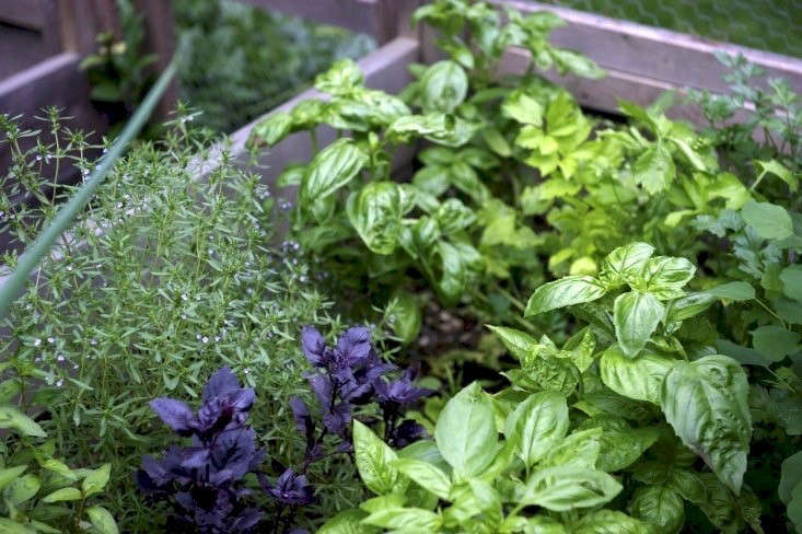 Something as small and simple as a raised-bed herb garden can be deeply satisfying. Photograph by George Billard, from Garden Visit: A Cook&#8
