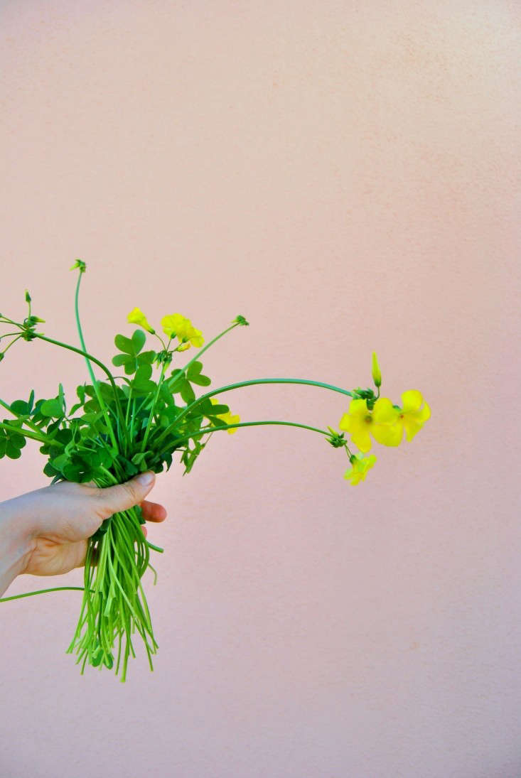Keep the Bermuda buttercup stems long, for dramatic arrangements.