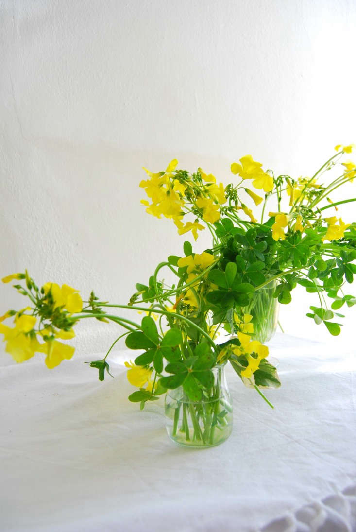Keeping the flowers in all glass, enables you to see the stems, which are part of the beauty of these plants and add a dose of bright green to dreary winter days.