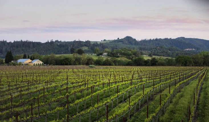 Founded in \198\1, Quivira Vineyards in Healdsburg, California was one of the first vineyards to be certified biodynamic in the United States. A bottle of \20\15 Refuge Sauvignon Blanc is \$30.
