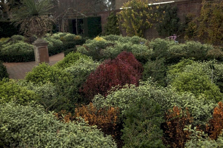 Red, orange and purple berberis are a standout in autumn and early winter.