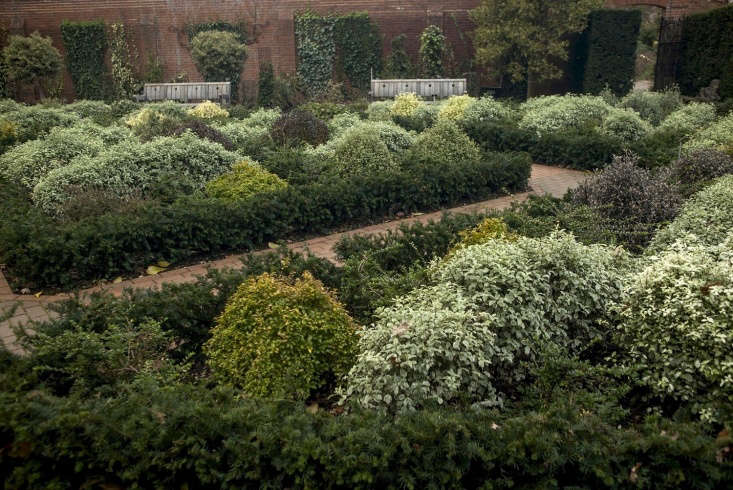 Above:The most surprising discovery was that a walled garden, divided into beds of low hedging, could be so lively and colorful in winter.