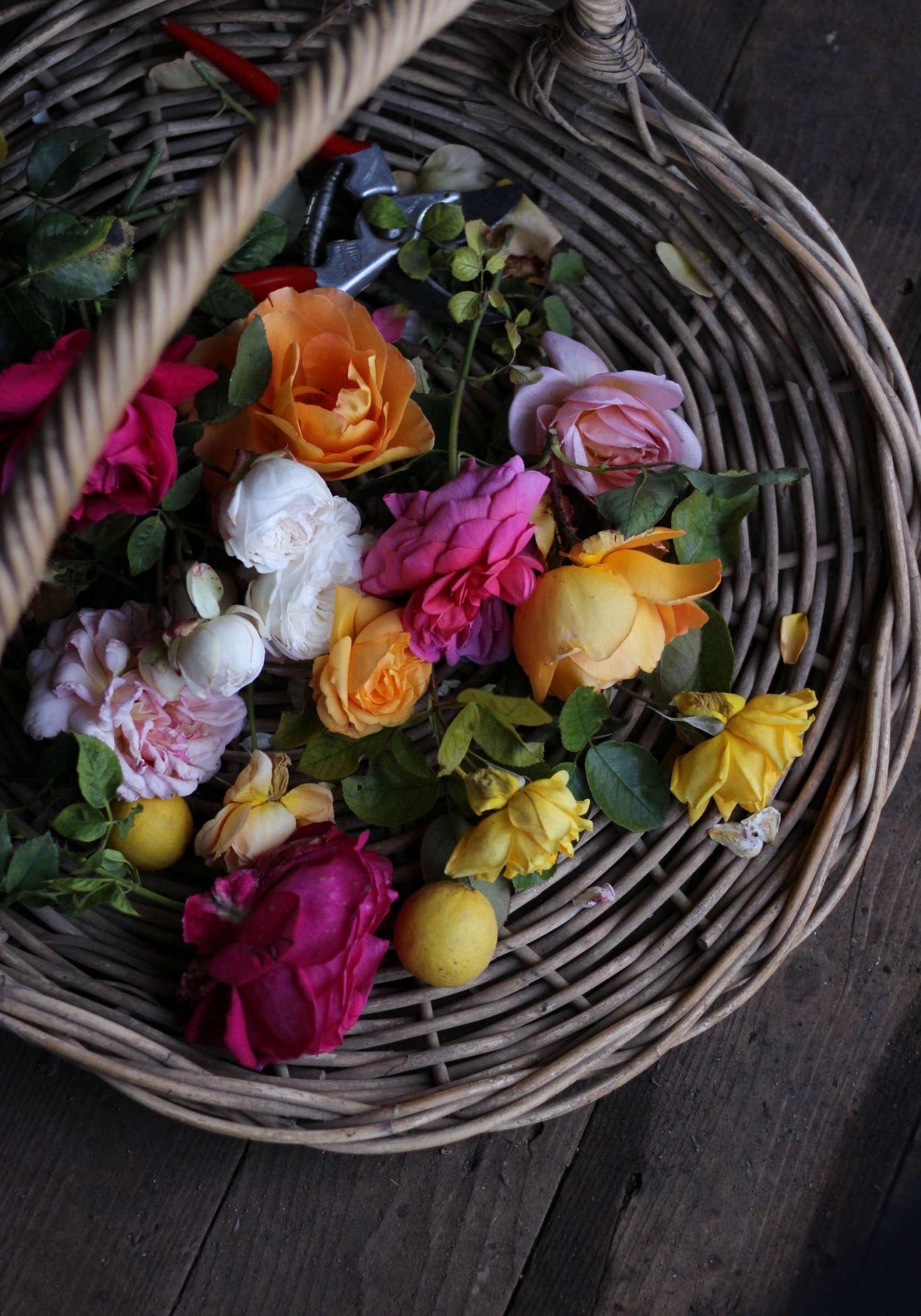 'Julia Child' at center. Danielle uses open flat baskets when harvesting.