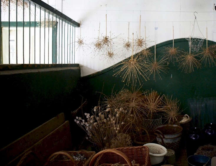 Dried alliums hang from the rafters in a UK stable. Photograph by Britt Willoughby Dyer. See more in Bayntun Flowers: Florist Polly Nicholson's Walled Garden in Wiltshire.
