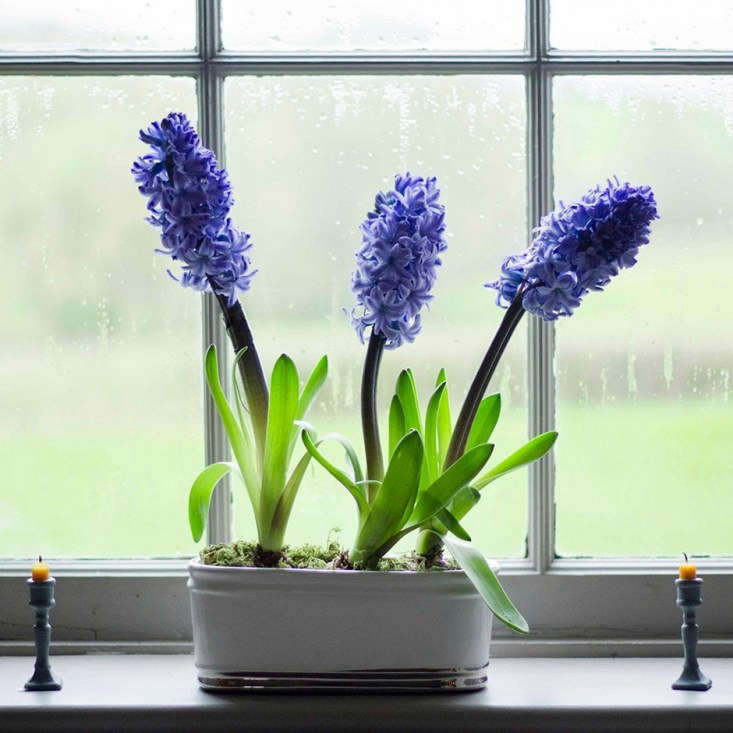 A Bulbs for Christmas Collection including \25 hyacinth and narcissus bulbs is £\29.98 from Crocus.