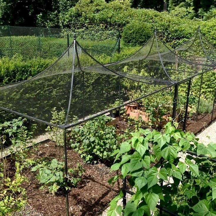APeak Roof Decorative Steel Fruit Cage is £648 from Harrod Horticultural. If you want to go bespoke, the sky is the limit with these structures.