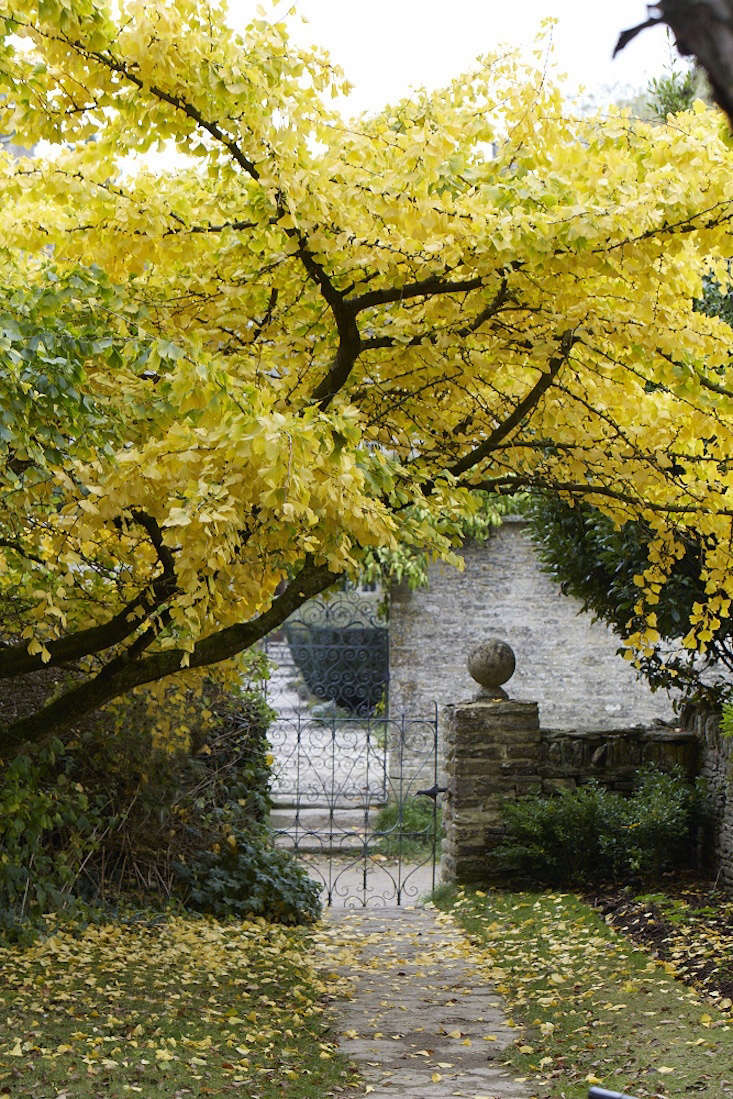 iron garden gate by Britt Willoughby Dyer