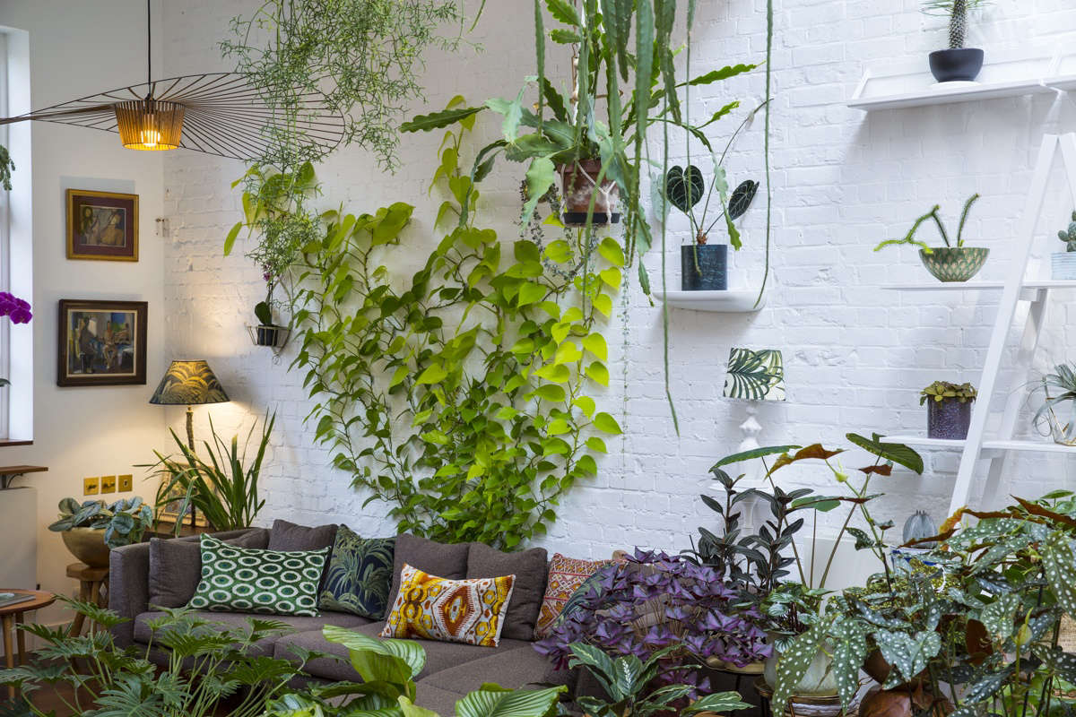 Absolutely everyone wants to know what the plant is that creeps up the white painted brick walls behind his sofa—and how it stays there. It&#8