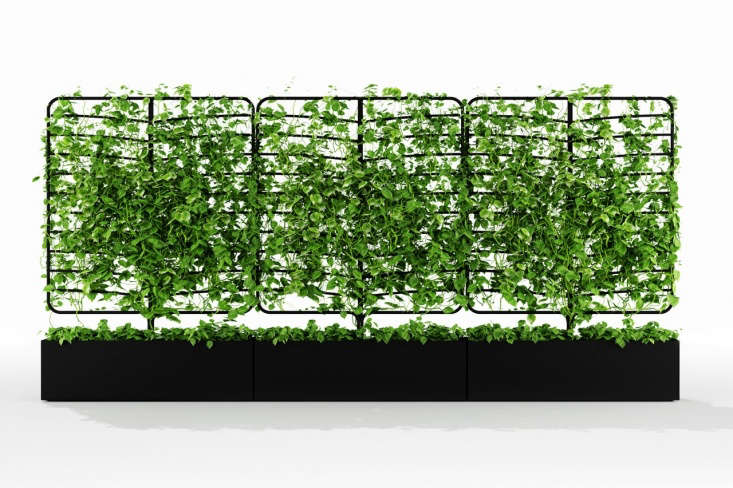 Kontouris&#8\2\17;s square-shaped Wattle planter can be massed to form a wall or screen. They&#8\2\17;re ideal for masking an ugly view.