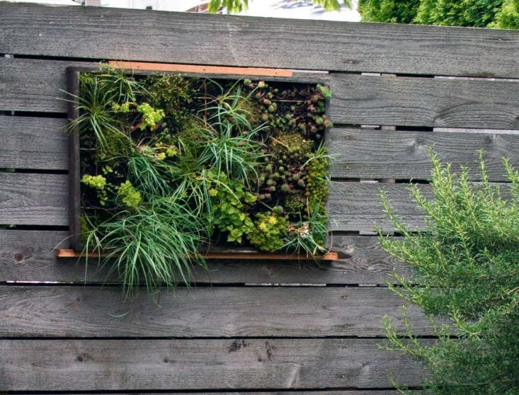 A vertical garden of succulents creates a focal point on a fence or facade without requiring more than a few inches of depth.
