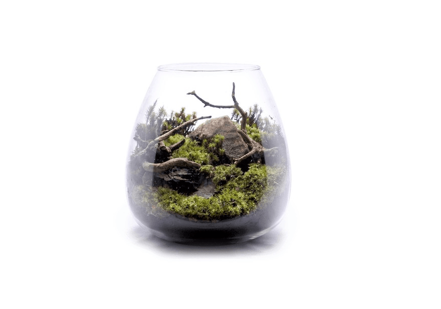 Photograph via Kokerium. A round Kokelium Kit is ¥3,480 (about $30.87 US) and comes with two varieites of moss.