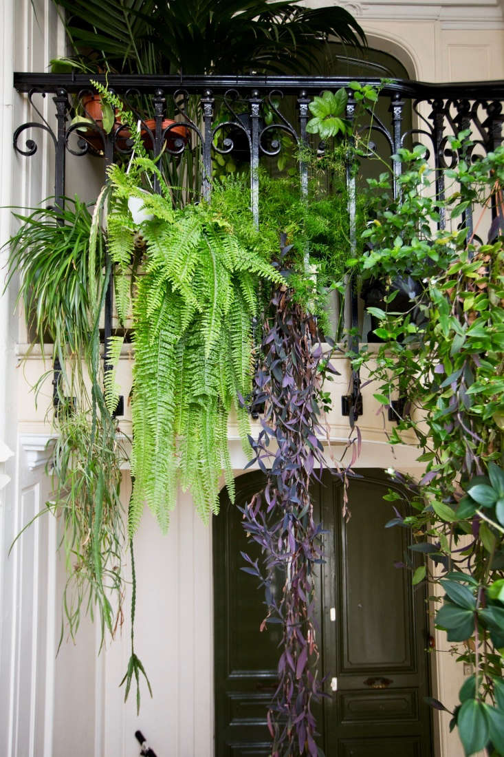 A cascade of ferns and vines creates a curtain of mystery and privacy for an entryway.