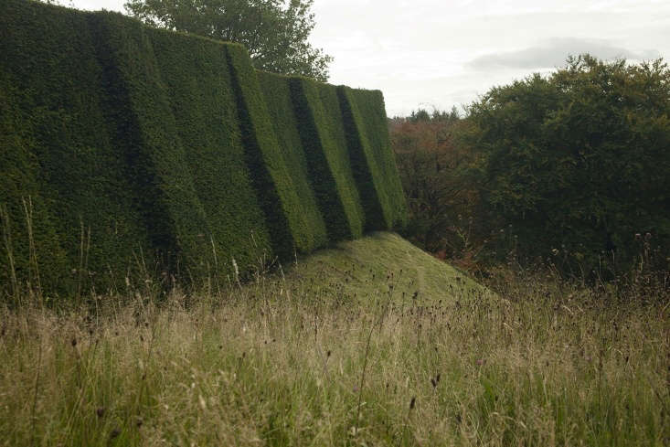 Ramparts of yew, with common knapweed growing in the longer grass descending from the terrace.