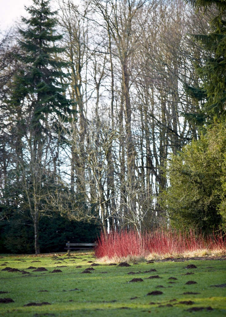 A distant fire. Plant red twig dogwood en masseto draw the eye (past the molehills) toward a horizon of color.