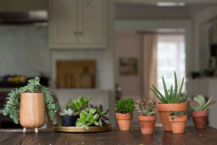 To avoid frying your succulents in the winter, keep them away from radiators and space heaters.