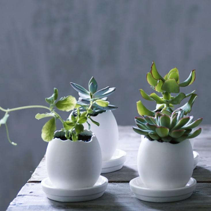 Each pot is about \2.5 inches tall.