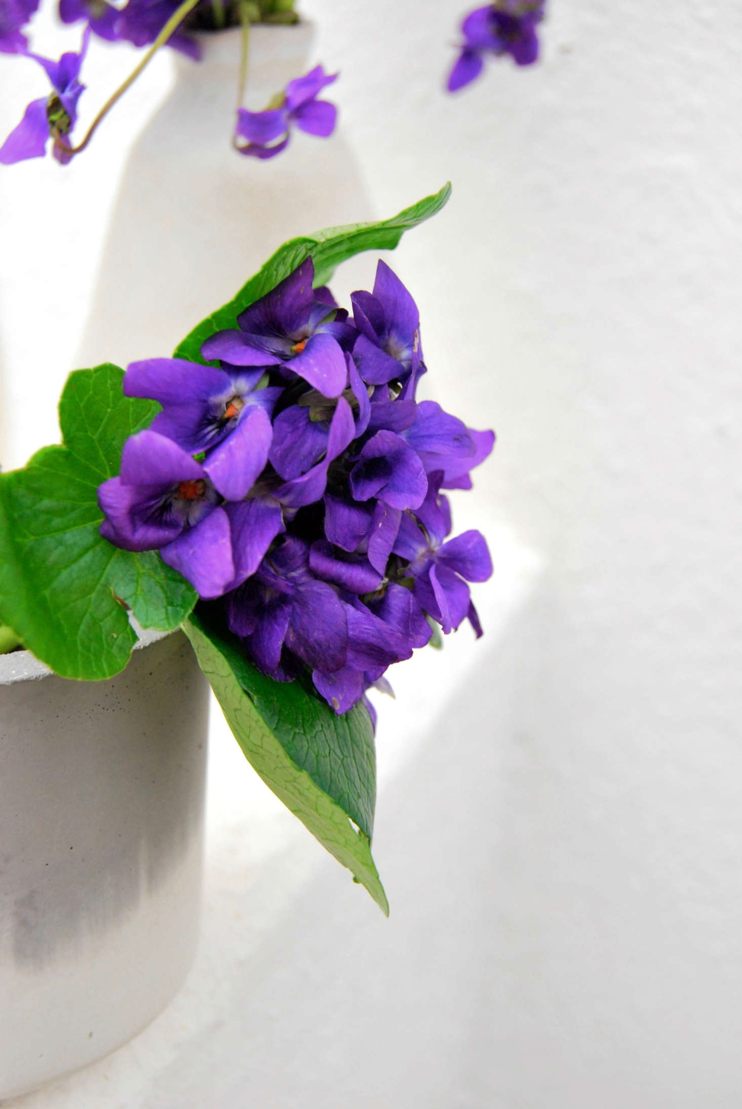 Letting the bouquet hang out over the side, or using a vase where you can see the stems, creates a more modern look for the violets.