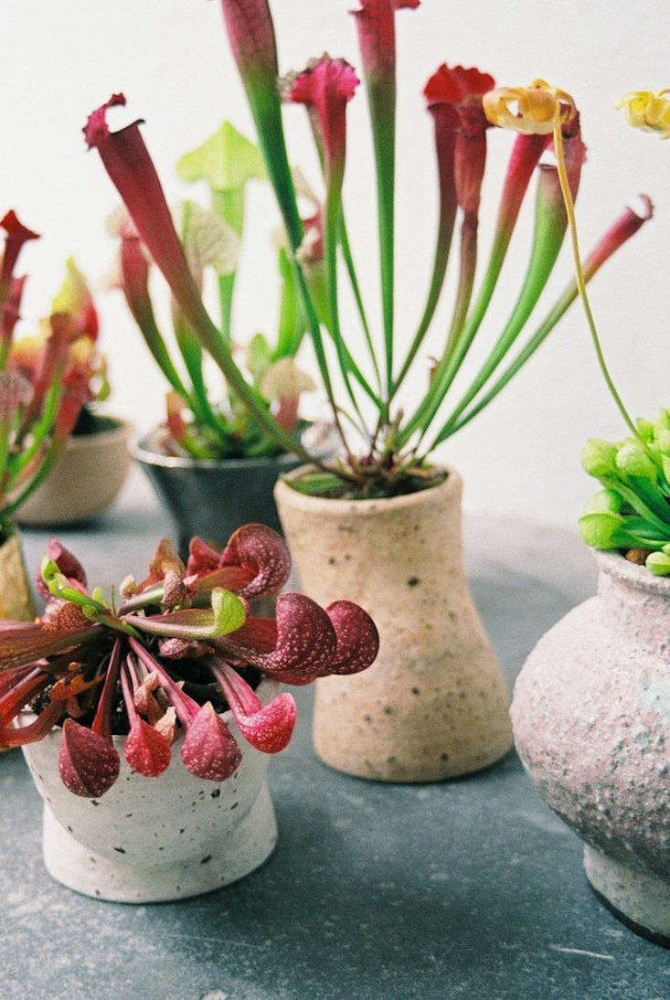 Carnivorous plants never looked better.