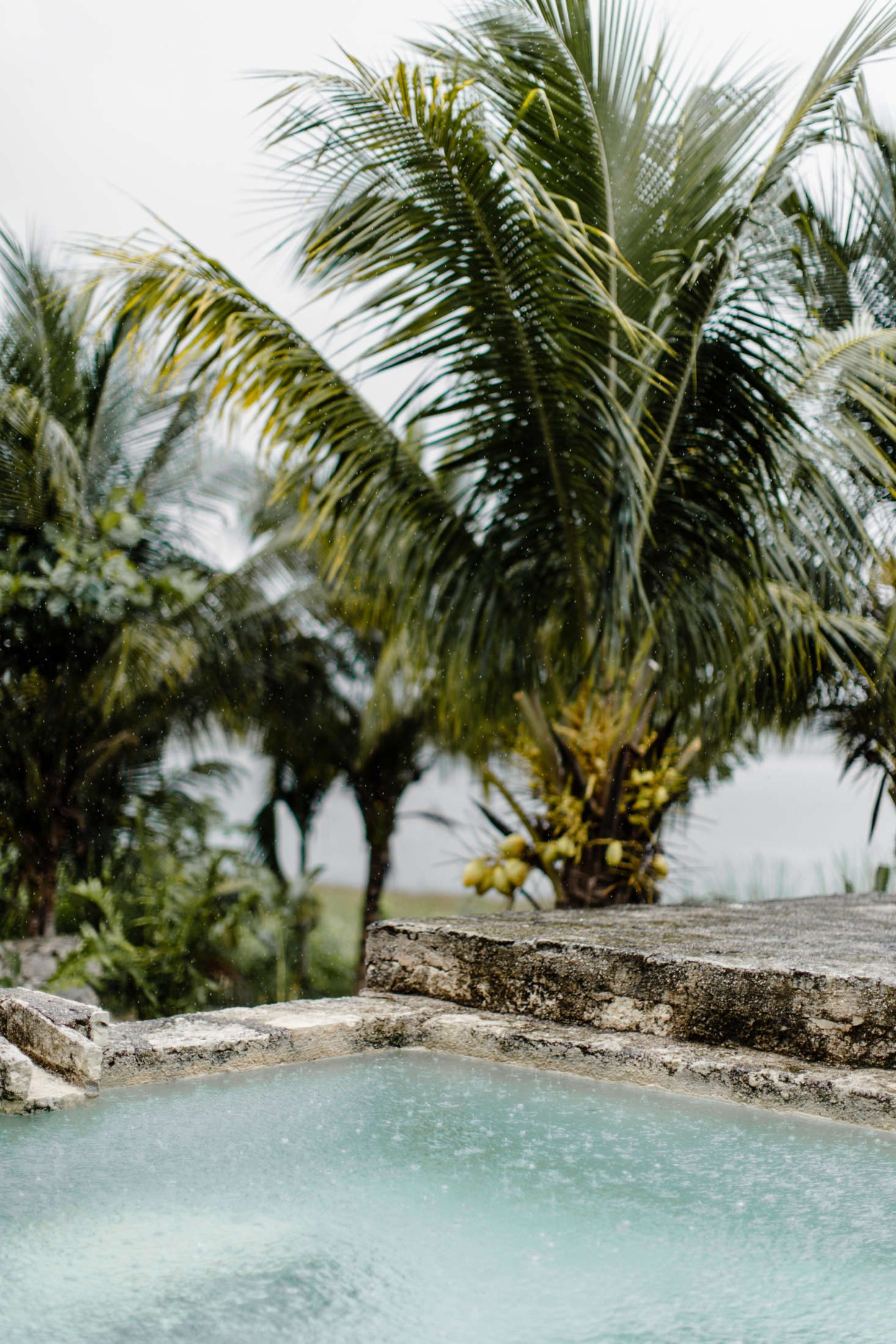 Stone coping surrounds a plunge pool, and a backdrop of palms acts as a screen.
