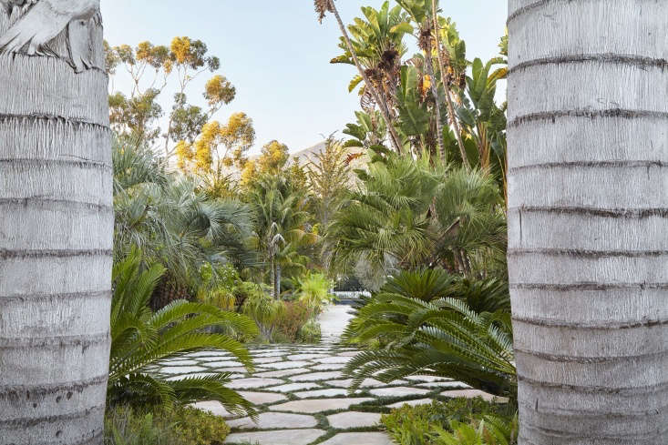 If you want to successfully add more bold fronds and a tropical style to your landscape,Designing With Palms is the comprehensive book for you.