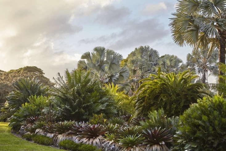 In a California garden, a backdrop of palms draws the eye toward the horizon.