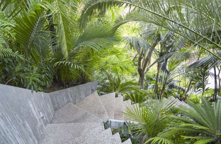 Lacy palm fronds soften the silhouette of a concrete stairway.