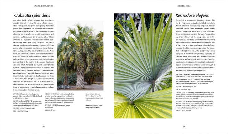 Well-chosen images help clarify and demonstrate the style and ultimate size of the palms.