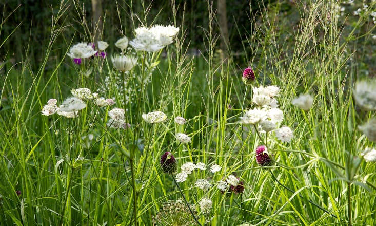 For a similar white astrantia, consider Astrantia major &#8
