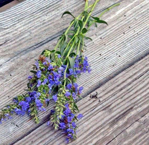A packet of Blue Hyssop officinalis seeds in a brown kraft envelope is $