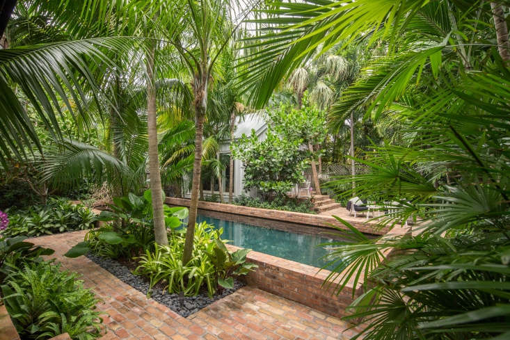 Rhapis humilis (slender lady palm) shields the pool and filters sunlight through its fronds.