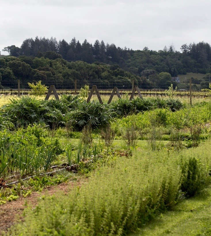From artichokes and asparagus to strawberries and tomatoes, the gardens produce seasonal food for members to harvest themselves.