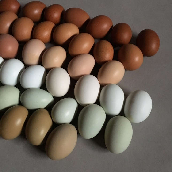 An Easter-ready sampling from the Fancy F.Delphia and Dunn produce eggs in six shades: olive, blue-green, white, light brown, dark brown, and chocolate.