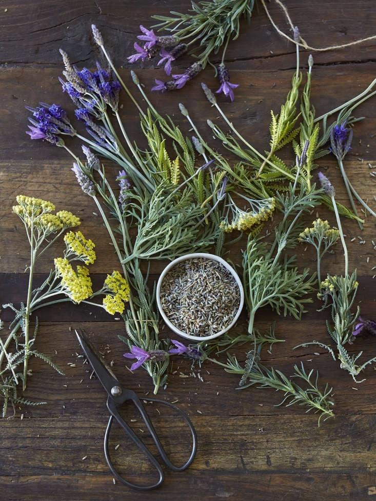 Generally, brewing a tisane with fresh herbs and flowers will result in a more intense flavor than using dried counterparts.