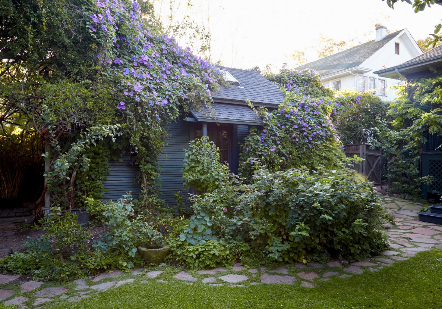 A riot of morning glory vines and nasturtiums keep company in chef Alice Waters's garden in Berkeley, California. See more in Californians at Home: Intimate Portraits by Leslie Williamson.