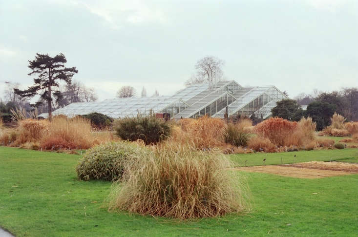 Swaths of grasses create a painterly effect at the Royal Botanical Gardens at Kew in London. Photograph by Eurovizion via Flickr.