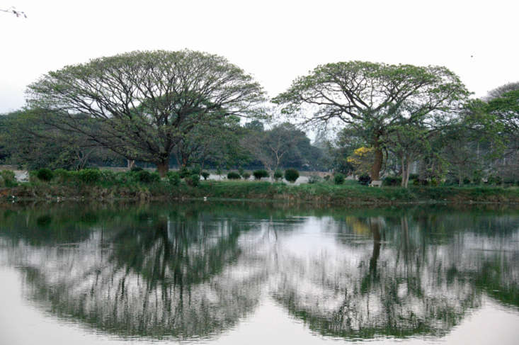 At the Lalbagh Botanical Garden in Bangalore, a pair of magnificent trees cast fan-shaped shadows on the water at lake&#8