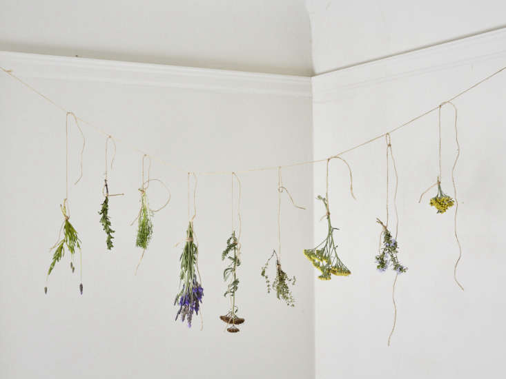 Stay tuned for step-by-step instructions to dry herbs at home. And in the meantime, learn about more ways to use fragrant herbs in Everything You Need to Know About Lavender (Plus 5 Kinds to Grow). Photograph by Aya Brackett.