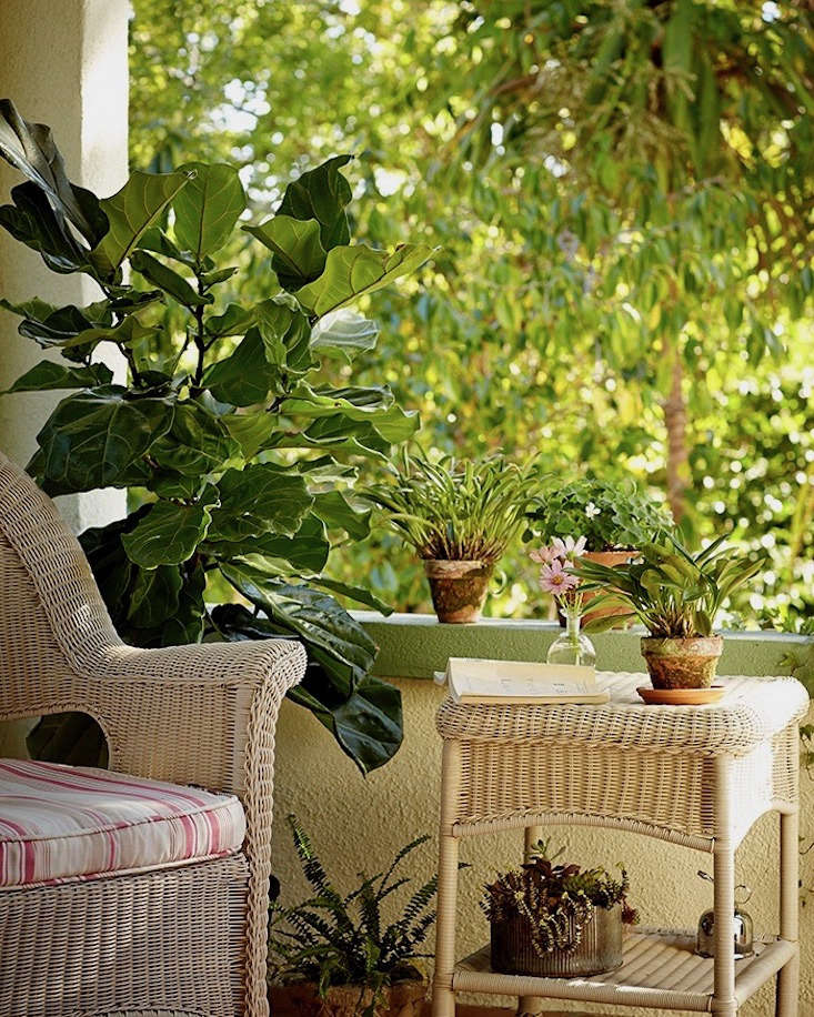 In nice weather, houseplants appreciate some outdoor time, to get better air circulation and higher humidity levels. Photograph by John Merkl.