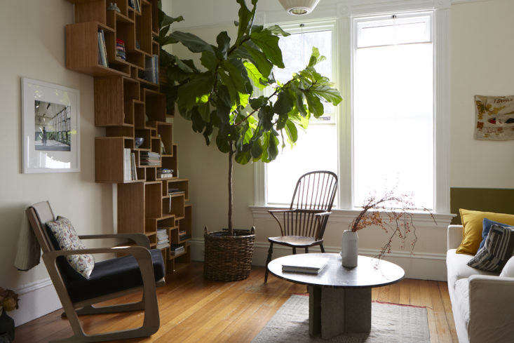 A healthy fiddle leaf fig tree in my friend George&#8\2\17;s apartment. Photograph by Kelly Marshall, from Expert Advice: How to Organize a Dinner Party with Minimal Effort.