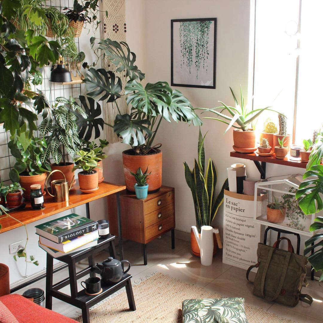 Jan from the Czech Republic has lots of great ideas for plant display: Check out his grid against the wall for a space-saving arrangement.
