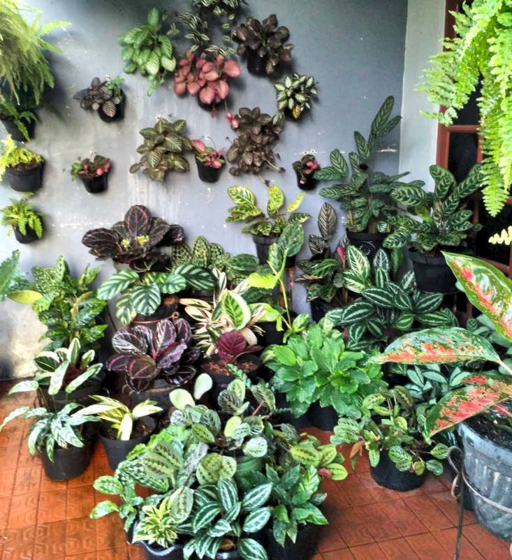 Despite the language barrier, this account speaks eloquently through pictures alone, showing off a stunning collection of plants in rude health, particularly Episcias and and Coleus.