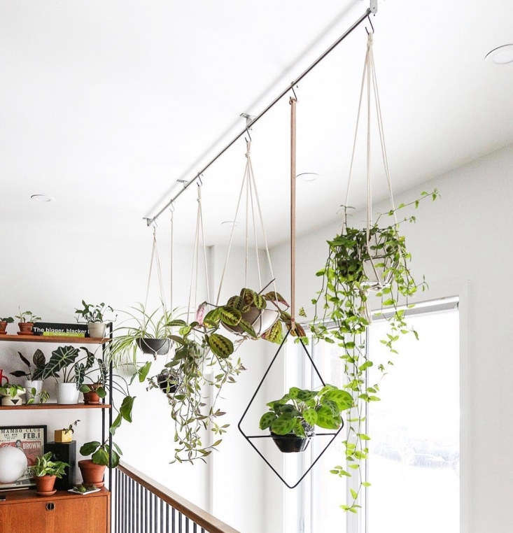 Jonathan Lefrançoishas a cat named Grysou so he tries to position his plants out of reach of paws with some creative hanging methods.